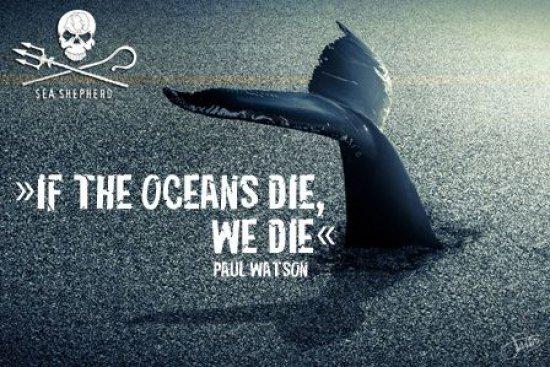 Wellenreiten zum Schutz der Ozeane und seiner Bewohner